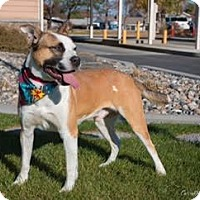 Adopt A Pet :: Cowboy - West Richland, WA