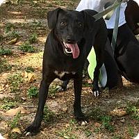 Adopt A Pet :: Jason - Boca Raton, FL