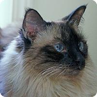 Adopt A Pet :: Holly - Victor, NY