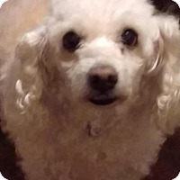 Adopt A Pet :: Mini - Brattleboro, VT