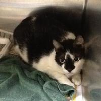 Adopt A Pet :: 35858520 - Land O'Lakes, FL