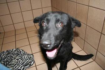 Shepherd (Unknown Type) Mix Dog for adoption in San Antonio, Texas - Romeo