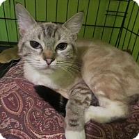 Adopt A Pet :: Suki - Coos Bay, OR