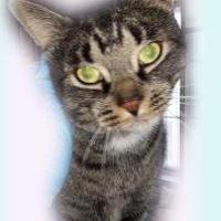 Adopt A Pet :: Cutesywoozy(Cuteypie) - Simcoe, ON