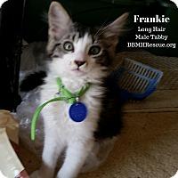 Adopt A Pet :: Frankie - Temecula, CA