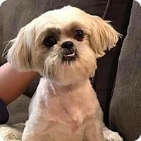 Adopt A Pet :: Bailey Jean - Lindale, TX