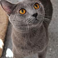 Adopt A Pet :: Ven - Michigan City, IN