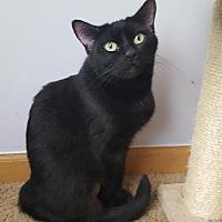 Adopt A Pet :: Lailani - Columbus, OH