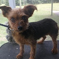 Adopt A Pet :: Queenie - Bonifay, FL