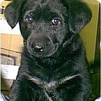 Adopt A Pet :: Jasmine - dewey, AZ