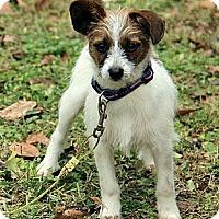 Adopt A Pet :: Baxter - Staunton, VA