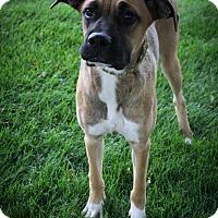 Adopt A Pet :: POCAHONTAS - Broomfield, CO