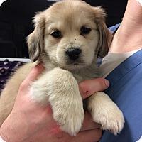 Adopt A Pet :: Mable - Cumming, GA
