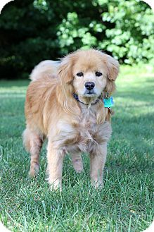 Chow Chow Mix Dog for adoption in Waldorf, Maryland - Leroy