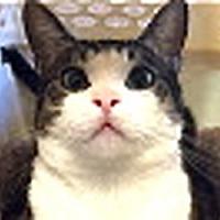 Adopt A Pet :: Guapo - LaJolla, CA