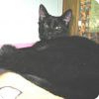 Adopt A Pet :: Katie - Powell, OH