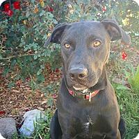 Adopt A Pet :: Priya - Fredericksburg, TX