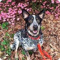 Adopt A Pet :: Tucker - Garden City, NY