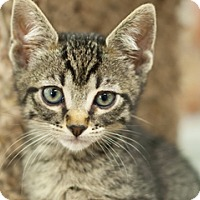 Adopt A Pet :: Scarlett - Great Falls, MT