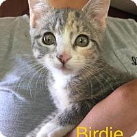 Adopt A Pet :: Birdie - Hampton, VA