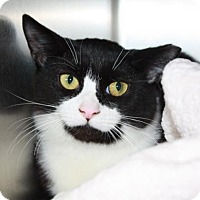 Adopt A Pet :: Panda - Richmond, VA