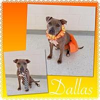 Adopt A Pet :: Dallas - Pawsitive Direction - Loxahatchee, FL