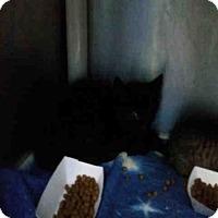 Adopt A Pet :: LINDT - Fort Collins, CO