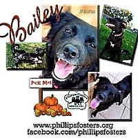 Adopt A Pet :: Bailey - Colleyville, TX