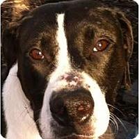 Adopt A Pet :: PUMPKIN - Dennis, MA