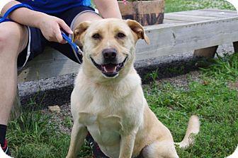 Labrador Retriever Mix Dog for adoption in Elyria, Ohio - Porthos-Prison Dog