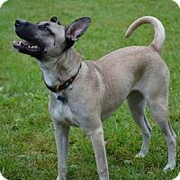 Adopt A Pet :: CC - Hamilton, ON