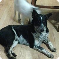 Adopt A Pet :: Scotch - Albert Lea, MN