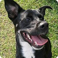 Adopt A Pet :: LILLY - Odessa, FL