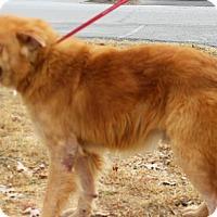 Adopt A Pet :: Walker - BIRMINGHAM, AL
