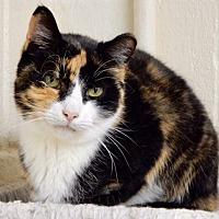 Adopt A Pet :: Aurora - Long Beach, NY
