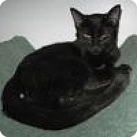 Adopt A Pet :: Simone - Powell, OH