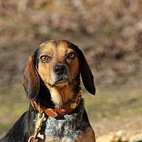 Adopt A Pet :: Kyra - Waynesboro, TN