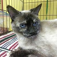 Adopt A Pet :: Maxine - Palo Cedro, CA