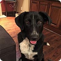 Adopt A Pet :: Hanz - Lutherville, MD