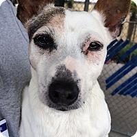 Adopt A Pet :: Millie - Chula Vista, CA