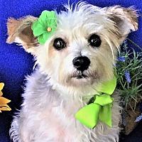 Adopt A Pet :: Mira - Irvine, CA