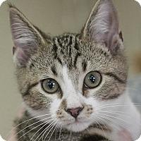 Adopt A Pet :: Podrick - Homewood, AL