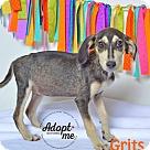 Adopt A Pet :: Grits