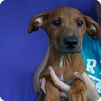 Adopt A Pet :: Chad - Oviedo, FL