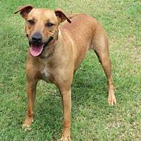 Adopt A Pet :: PERICLES - Edmond, OK