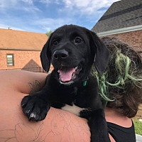 Adopt A Pet :: Hannah - Hamden, CT