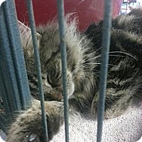 Adopt A Pet :: Fluffy - Silver Lake, WI