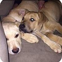 Adopt A Pet :: Grant and Buddy - Marlton, NJ