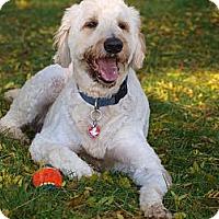 Adopt A Pet :: Huxtable - Toronto/Etobicoke/GTA, ON