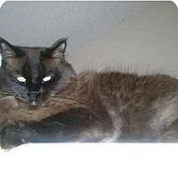 Adopt A Pet :: Tatie - Beverly Hills, CA